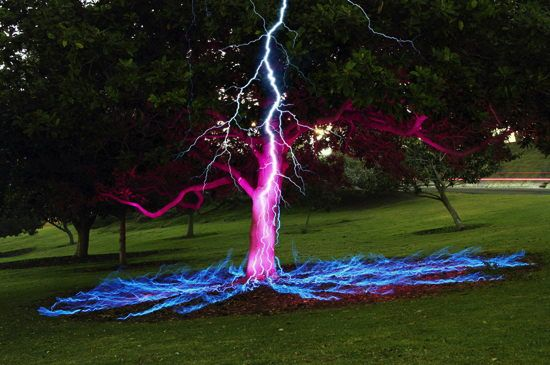 lightning_tree_image-550×365